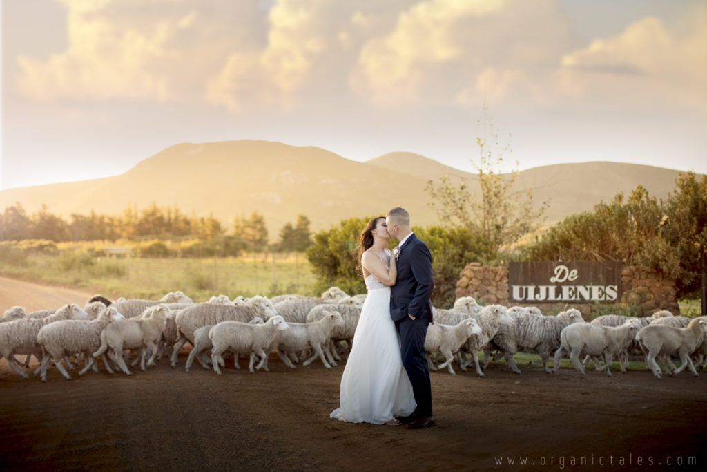 Sheep decided to photobomb this wedding and here are the results!